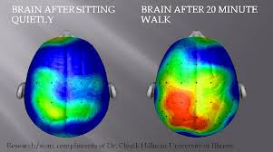 ***Your Brain on Movement***